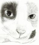 三毛猫鉛筆画230